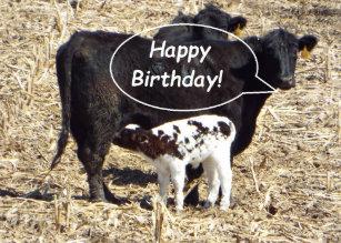 Funny Cute Cow Birthday Cards Zazzle