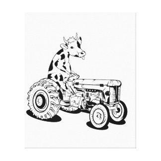 Funny cow on a tractor canvas print