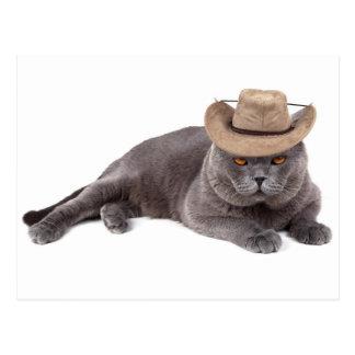 Funny cowboy cat postcard