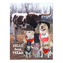 Funny Cowboy Pets Hello from Texas Postcard