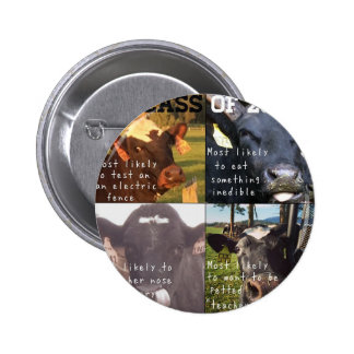 Funny Cows Pinback Button