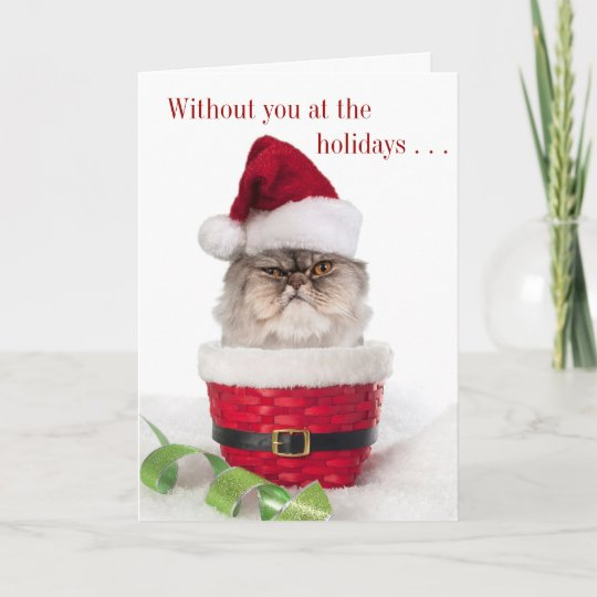 funny cranky cat christmas cards