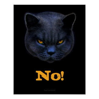 Funny Cross Cat says No Poster