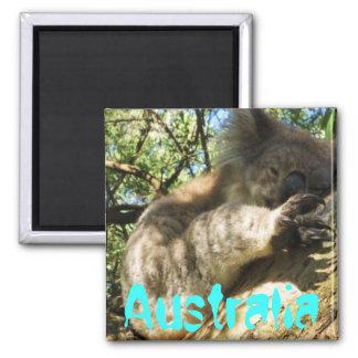 Funny cute Australia koala magnet design