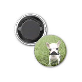 Funny Cute Chihuahua with Mustache 1 Inch Round Magnet