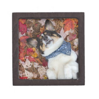 Funny, Cute, Corgi Look Gift Box