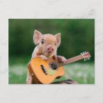 Funny Cute Pig Playing Guitar Postcard
