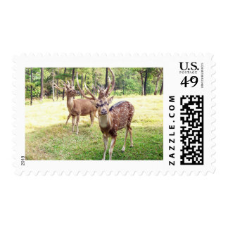 Funny deer looking at you postage stamps