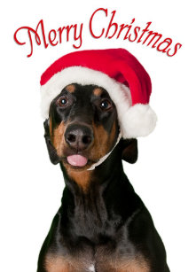 funny doberman dog christmas cards