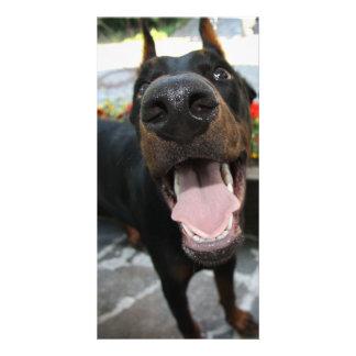Funny Doberman Photo Card