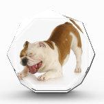 funny dog acrylic award