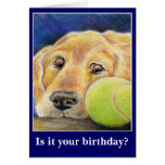 Funny dog birthday or other occasion greeting card