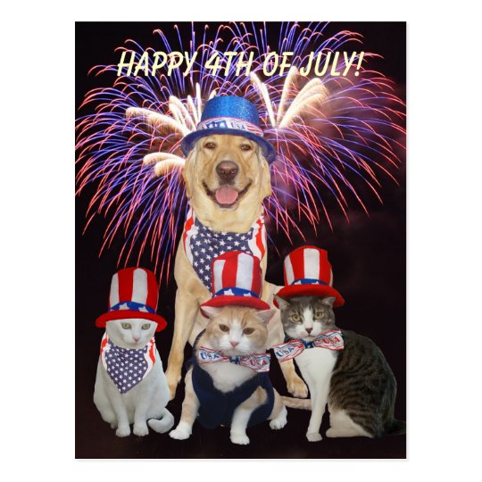 Funny Dog/Cat July 4th Postcard