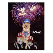 Funny Dog/Cat July 4th Postcard