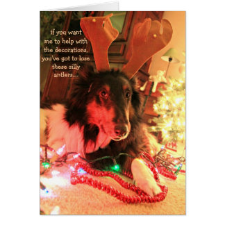 Funny Dog Christmas, Collie w/ antlers xmas lights Card