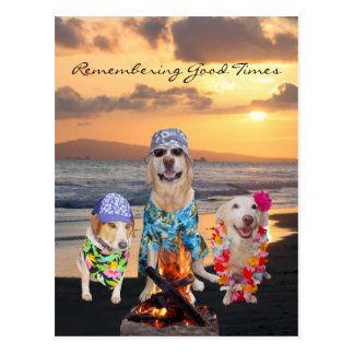 Funny Dog Graduation Party on the Beach Postcard