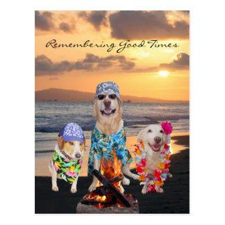 Funny Dog Graduation Party on the Beach Postcard