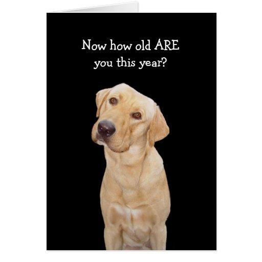 Funny Dog/Lab Birthday Greeting Cards