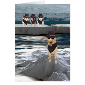 Funny Dog/Lab Happy Birthday Mr. Cool Greeting Cards