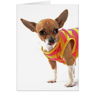 Funny Dog making faces Chihuahua Card