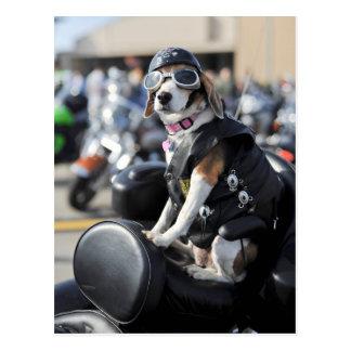 Funny dog on motorcycle photo postcard