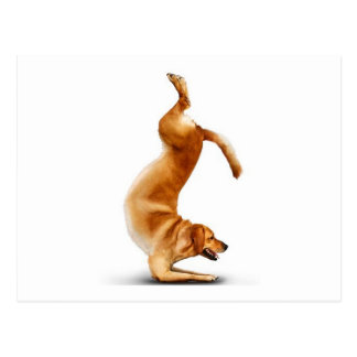 Funny dog postcard