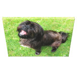 Funny dog with attitude! canvas prints