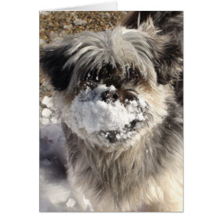 Funny Dog with Snow on Nose Card