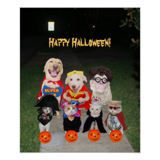 Funny Dogs & Cats Halloween Poster