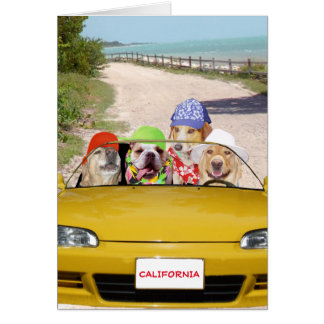Funny Dogs/Labs Surfer Birthday Card