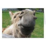 Funny Donkey Close Up Card
