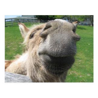 Funny Donkey Close Up Postcard