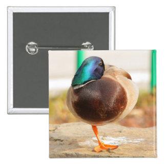 funny duck 2 inch square button