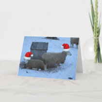 Funny Ewe Sheep Christmas Card