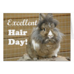 "Funny ""Excellent Hair Day"" for Rabbit."