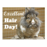 "Funny ""Excellent Hair Day"" for Rabbit. Postcard"