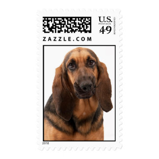Funny Face Bloodhound Postage