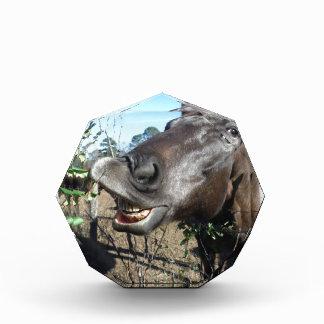 Funny Face brown horse Acrylic Award