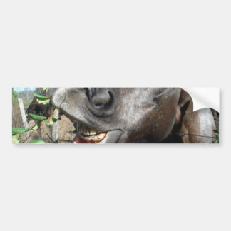 Funny Face brown horse Bumper Stickers