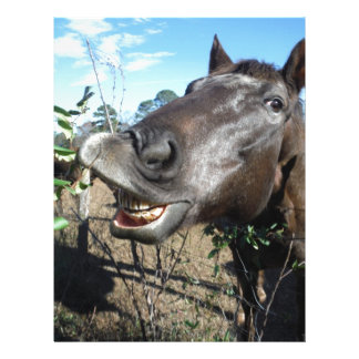 Funny Face brown horse Custom Letterhead