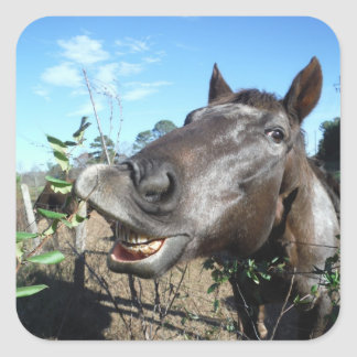 Funny Face brown horse Stickers