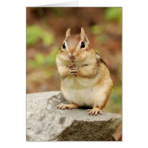 Funny Face Chipmunk Card