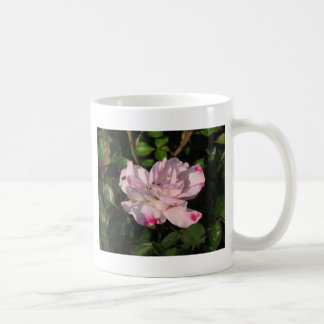 Funny Face Shrub Rose 115 Coffee Mug