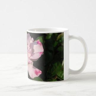 Funny Face Shrub Rose 115 Mug
