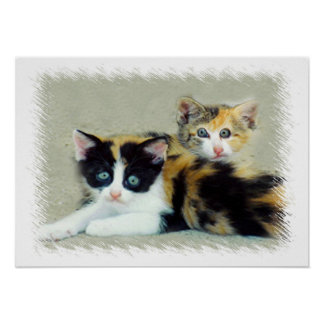 Funny Faced Kittens Print