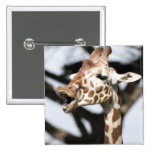 Funny faced reticulated giraffe, San Francisco 2 Inch Square Button