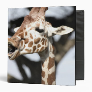 Funny faced reticulated giraffe, San Francisco 3 Ring Binder