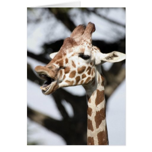 Funny faced reticulated giraffe, San Francisco Greeting Card