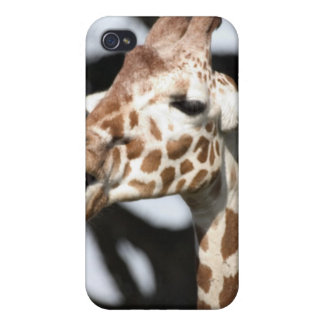 Funny faced reticulated giraffe, San Francisco iPhone 4/4S Case