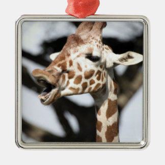 Funny faced reticulated giraffe, San Francisco Metal Ornament